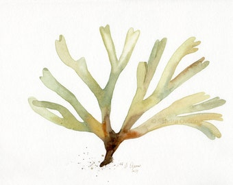 Green Seaweed watercolor painting  - Dictyota dichotoma Algae - OOAK art illustration