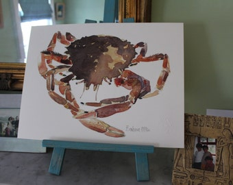 Spider Crab, Maja squinado