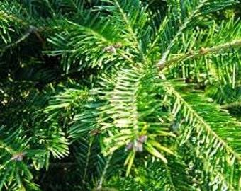 Bulk Dried Balsam Fir Needles Wild Harvested USA Grown Cut Up Loose 1 2 3 4 5 6 7 8 9 10 lb Traditional Christmas Fragrance Potpourri Sachet