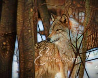Digital Art Timber Wolf Wildlife Fantasy