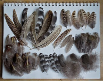 55pc Natural Craft Feathers, Small Feathers, Pheasant, Chicken, Feather Jewelry Kit, Witchcraft, Hat, Earrings
