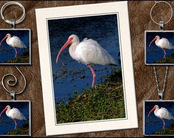 White Ibis Photo Note Card Set -  Ibis Pendant, Ibis Keyring, Ibis Ornament, Ibis Wine Charm - Blank Bird Greeting Card Handmade (GP120)