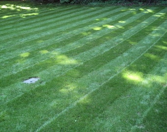 Blackjack Bermudagrass Seed,perfect for the home lawn, parks or sports fields.
