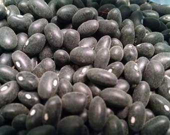 Black Turtle Beans (Bush) - Heirloom Seed (100 Pc)