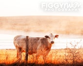 Country Landscape, Cow Photography, Texas Fields, 8x10 Photography Print