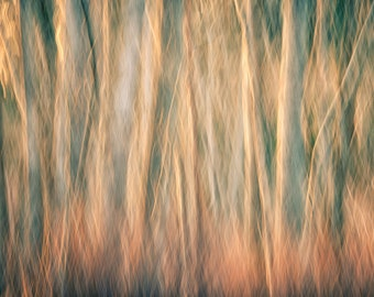 """Trees abstract fine art photography notecard - 5x7"""" frameable"""