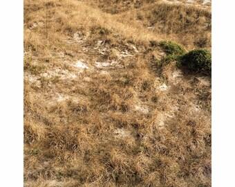Beach Imprints (3)