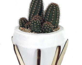 """Synthesis of Life Planter with Live Cactus Plant - White - 3.5"""" x 3.5"""" x 6.5"""""""