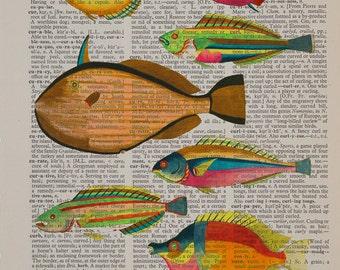 Vintage Fish Print, Dictionary Art Print, Hand painted fish, Colorful Fish Marine Life Wall Art Home Decor da1393