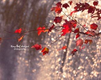 Bright Red Leaves Framed by Waterfall -  Original Photography