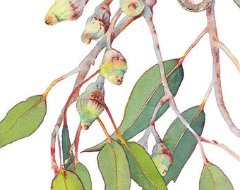 Eucalyptus watercolor print - A4 botanical print - Australian native gum tree vertical wall art print - Australian art - nature picture