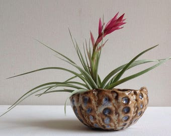 Small Air Plant Holder