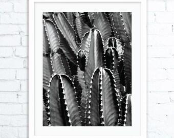 Cactus Wall Art Print, Succulent Print, Cactus Art, Cactus Art Wall, Succulent, Botanical Print, Succulent Wall Art Print, Cacti