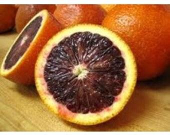 Blood Orange Balsamic Vinegar Traditional Barrel Aged 500ml / 16.9oz
