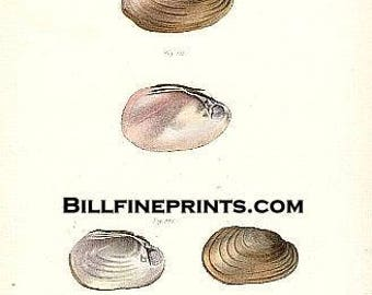 Plate 39 circa 1844