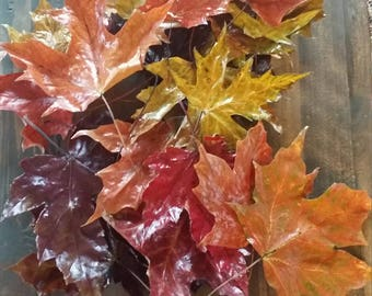 Real Glazed Fall Leaves - set of 25