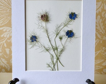 Real Pressed Flower Art Botanical Herbarium of Love in a Mist 11x14