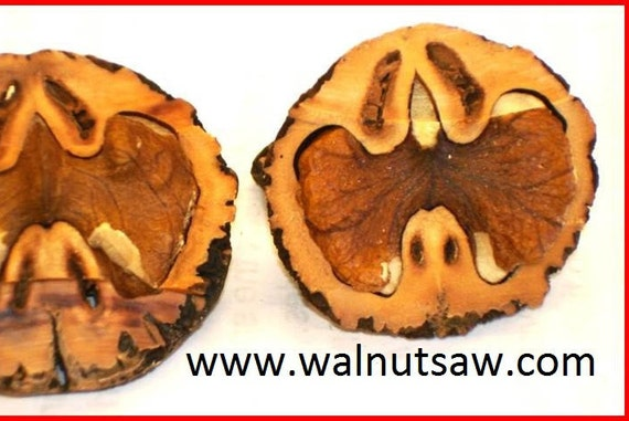 how to get the hull of black walnuts