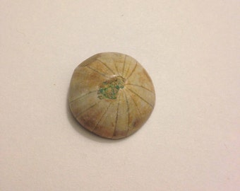 Ammonite Stone, Fossil raw, Ancient Stone
