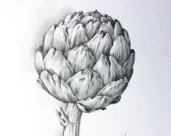 Artichoke ORIGINAL pencil drawing, Illustration, kitchen art, botanical art, gift, still life