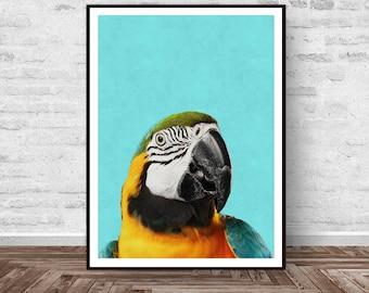 Bird Print, Tropical Decor, Bird Art, Parrot Print, Tropical Print, Colorful Modern, Bird Photography, Animal Print, Instant Download