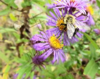 Bee In The Weeds
