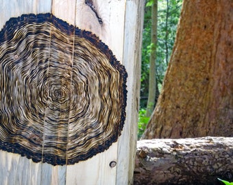 Rustic Tree Ring burned on pallet wood