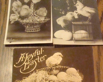 SALE 3 Real Photo Easter Postcards (Chicks)