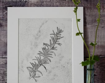 Original monotype print: Rosemary Officinalis