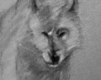 White Timber Wolf