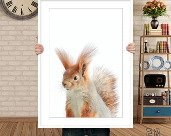 Squirrel Print, Nursery Wall Art, Squirrel Art, Squirrel Poster, Kids Room Animal, Squirrel Photo, Nursery Decor