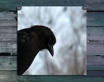 Crow Photograph, Raven Image, Gothic, Bird, Animal, Corvide Art, Urban Corvus, Rook, Blackbird Print - Insightful Crow