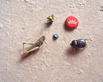 4 Real Insects Scarab Beetle. Grasshopper, Bumble Bee and Harlequin Bug for Assemblage Crafts Art Science Projects