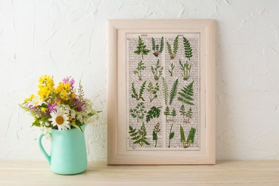 Summer Sale Wild Ferns collection Print on Vintage Dictionary Book page, Wild flora art, Wall art naturalist illustration BFL213