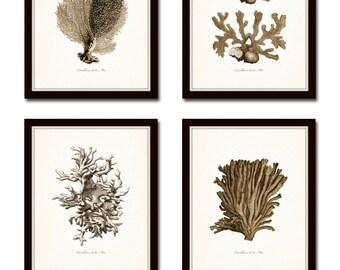 Vintage Sepia Sea Coral Print Set No. 2, Giclee Art Print, Beach House Art, Coastal Art, Prints and Posters, Coral Print, Illustration