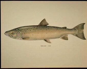 Salmon Fish Print Fishing Wall Art Wall Decor Cabin Decor