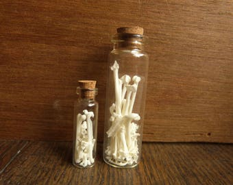 Starling Bones Natural History Specimen Vial Set