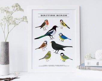 Birds print - British garden birdsprint / Travel Gifts / Gifts for Travellers / United Kingdom / Great Britain