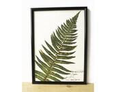 Fern print - Fern leaf decor - Home decor idea - botany art - Fern wall art