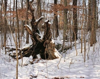 Fallen Tree In Snow - 9x12 Wintry Nature Art Photograph - Woods In Winter - Quiet Woodland - Limited Edition Forest Photo by Liberty Images