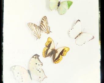 Photograph of Butterflies, Nature Photography, Butterfly Wall Art - yellow green white brown, Spring Decor, Neutral Modern Art, Minimalist