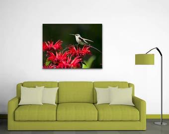 Hummingbird Canvas Print, Wall Art Canvas, Hummingbird Art, Canvas Wall Art, Stretched Canvas, Bird Decor, Hummingbird Print, Fine Art Print