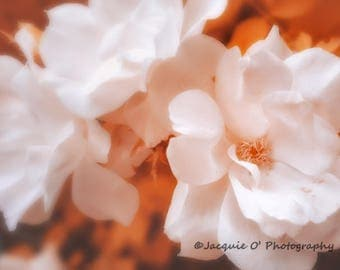 Creamsicle Roses