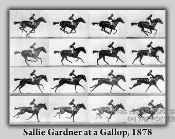 16x24 Poster; Sallie Gardner At A Gallop Eadweard Muybridge 1878