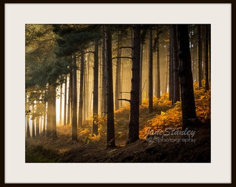 Landscape Photography, Mounted Photograph, Fine Art Photography, Sunset, Woodland, Cannock Chase