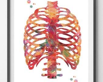 Rib cage watercolor print anatomy art thorax poster medical art skeletal system thorax print vertebral column ribs sternum wall decor poster