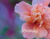 "Flower Photography, Nature Photography, Hibiscus Photo, Peach and Lilac Home Decor, Summer Fine Art Print ""Aloha"""