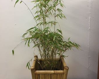 Vintage Bohemian Bamboo Plant Pot