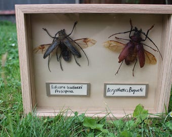 Framed Beetles