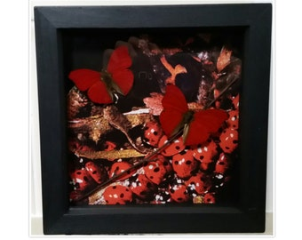 Real framed butterfly butterflies on ladybird ladybug nature mount pretty Taxidermy Oddities